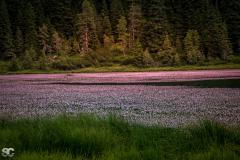 lago-di-calaita_43051266404_o