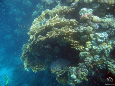 coral-reef_3858655437_o