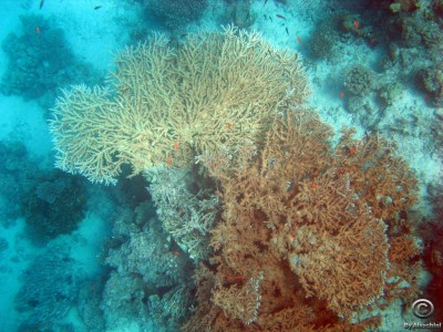 coral-reef_3859426794_o