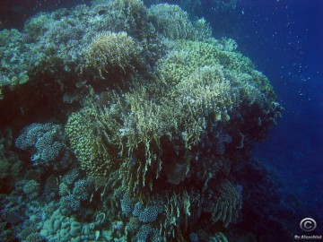 coral-reef_3859434232_o