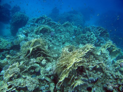coral-reef_6099813575_o