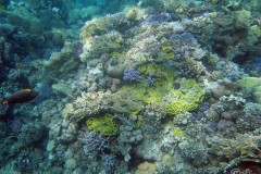 coral-reef_6099794641_o