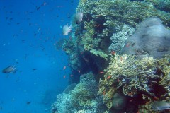coral-reef_6100200784_o